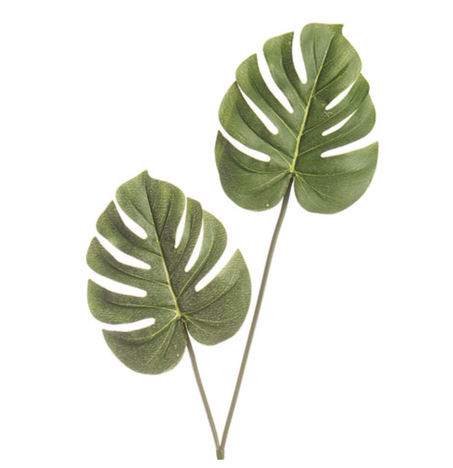 LONGSTEM PHILODENDRON PICK