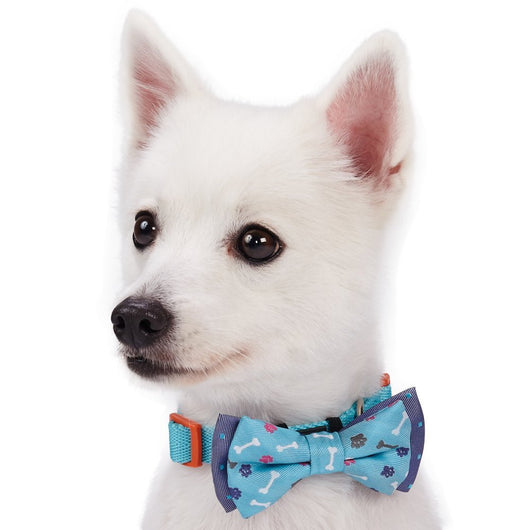 Blueberry Designer Pet Bowties - 2 Pack