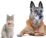 I'm Deaf double-sided pet ID tag for Dog or Cat with Personalized Pets Name & Contact Number on the back - EliteFanCo