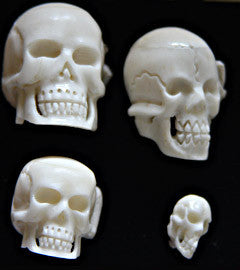 Buffalo Bone Carved Skulls