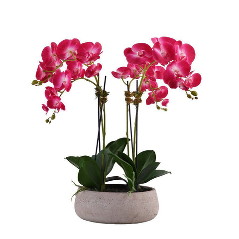 Medium Modern Purple Orchid Arrangement (Gray Concrete Pot)