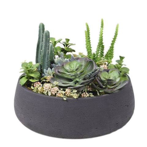 Medium Succulent & Cactus Arrangement (black pot)