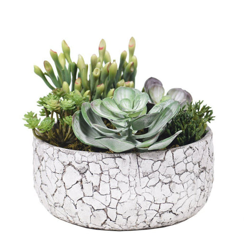 Medium Succulent Arrangement in Crackled Concrete Pot