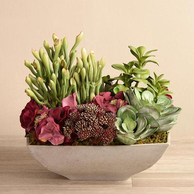 SALVADOR SUCCULENT ARRANGEMENT