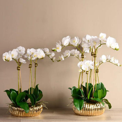 Royal Orchid Arrangement