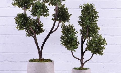 Artificial Boxwood, Fake Boxwood