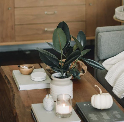 plant on coffee table