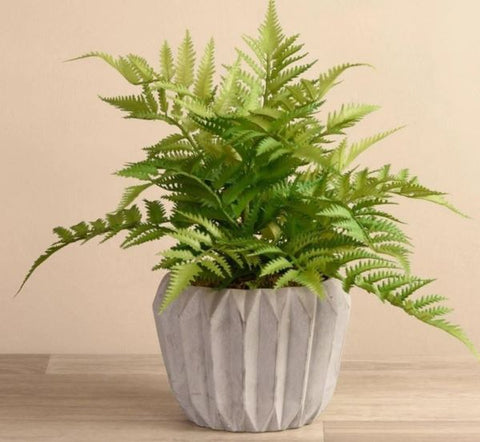 potted-fern