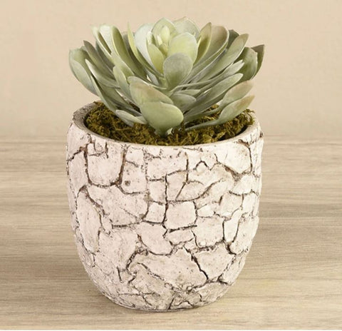 potted-succulent