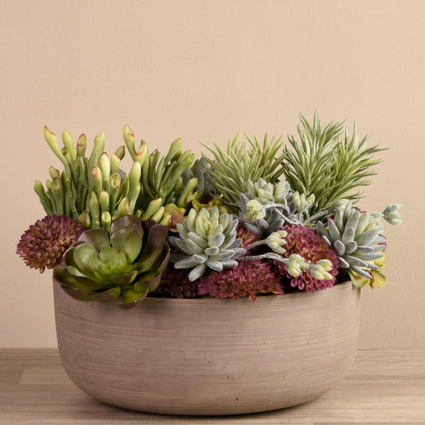 Bloomr Succulents Special Bloomr Artificial Flowers & Artificial Trees