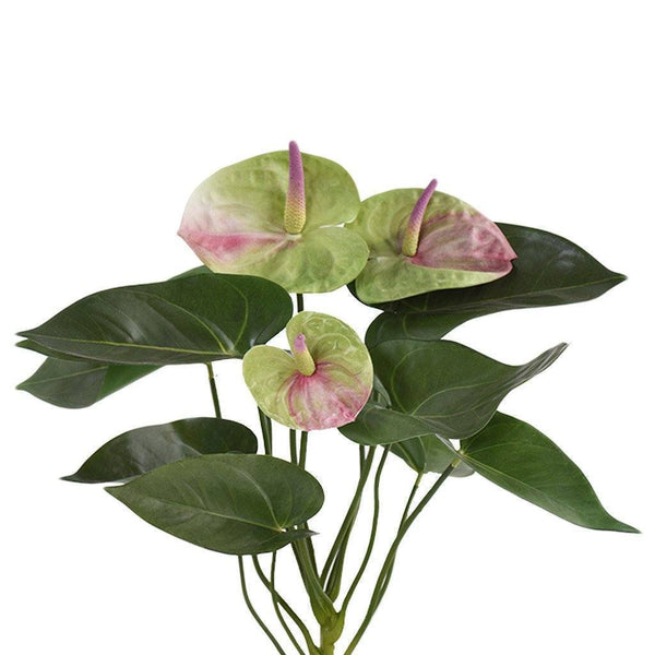 Anthurium Plant Bloomr Home Artificial Flowers and Trees