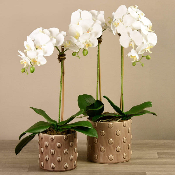 Artificial Orchid Arrangement in Dotted Beige Pot Bloomr Artificial Flowers & Artificial Trees
