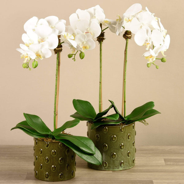 Artificial Orchid Arrangement in Dotted Green Pot Bloomr Artificial Flowers & Artificial Trees