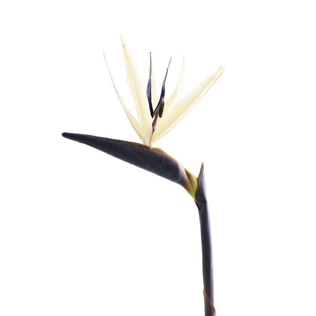 Bird of Paradise Bloomr Artificial Flowers & Artificial Trees