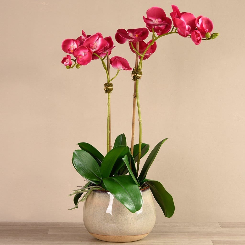 Santa Fe Orchid Arrangement Bloomr Artificial Flowers & Artificial Trees
