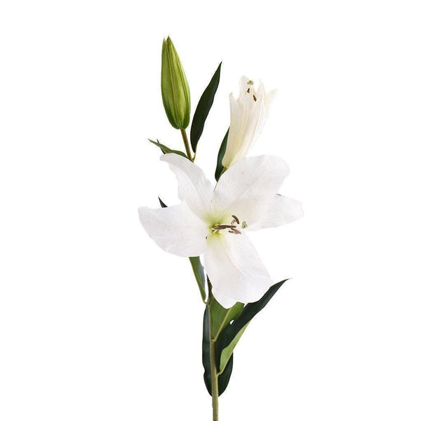 a stem of flourishing white lily and its blossom