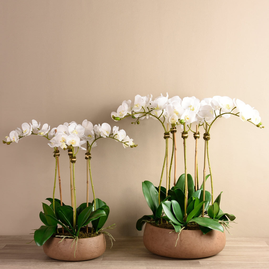 Oasis Orchid Arrangement - Bloomr