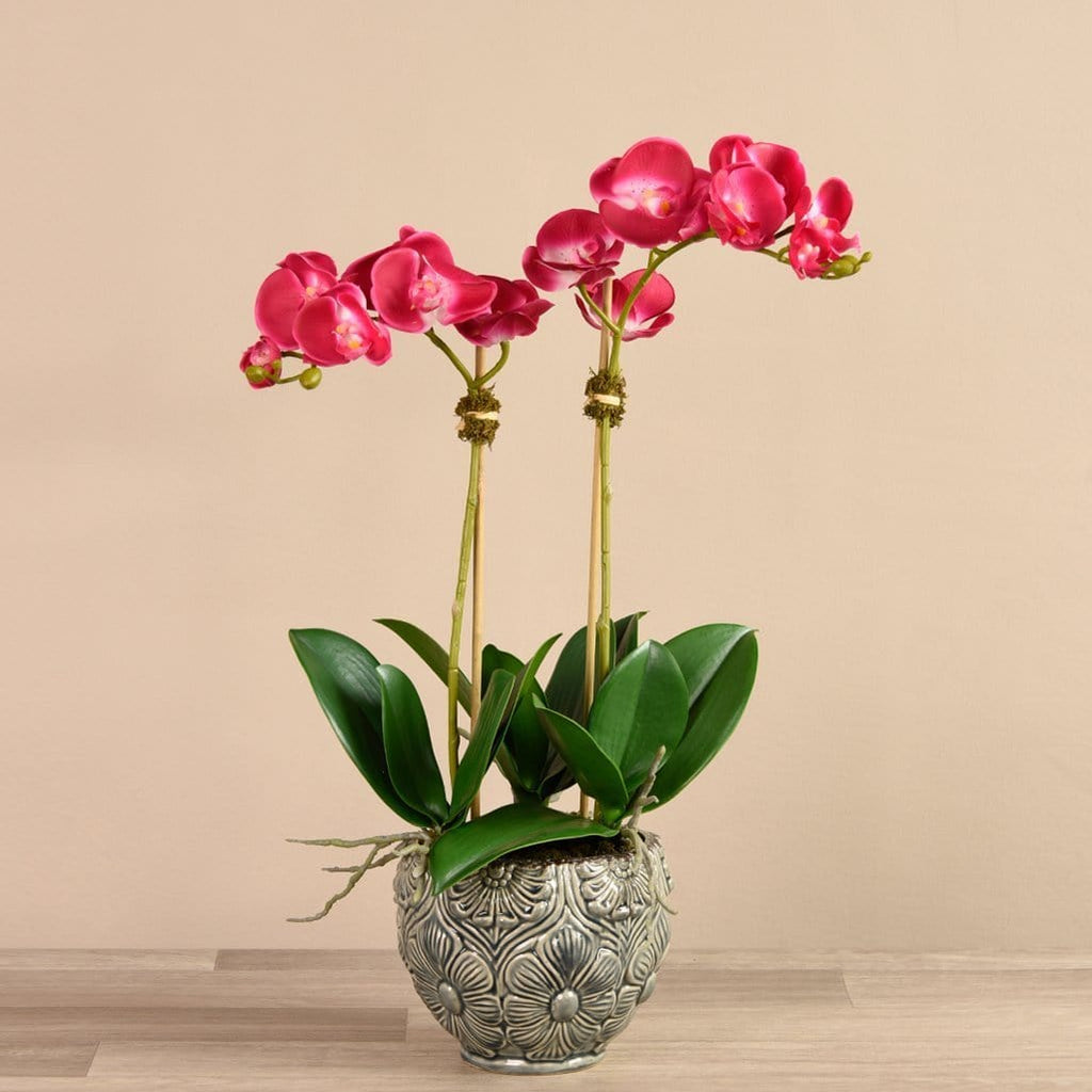 Orchid Arrangement in Ceramic Vase