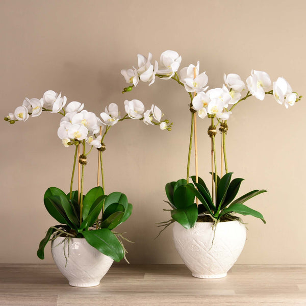 Moroccan Orchid Arrangement - Bloomr