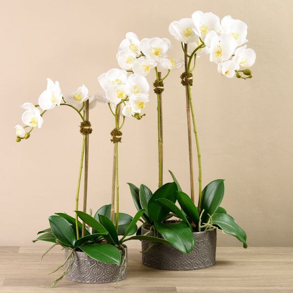 Orchid Arrangement in Ceramic Vase Bloomr Artificial Flowers & Artificial Trees