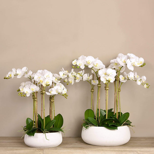 Oasis Artificial Orchids in White Pot - Bloomr