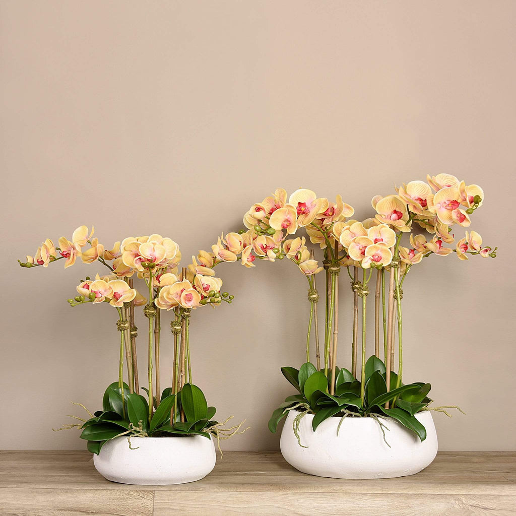 Oasis Artificial Orchids in White Pot Bloomr Artificial Flowers & Artificial Trees
