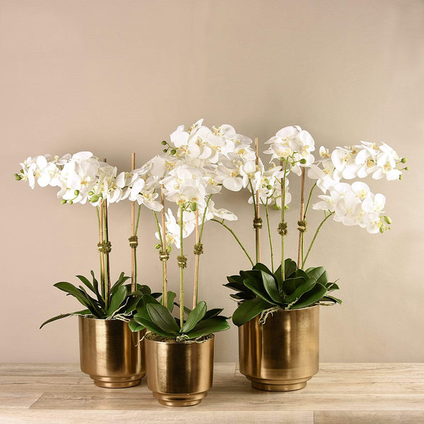 Artificial Orchid in Gold Vase - Bloomr