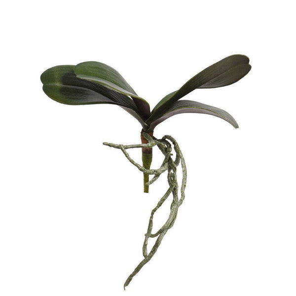 a branch of orchid leaves 1