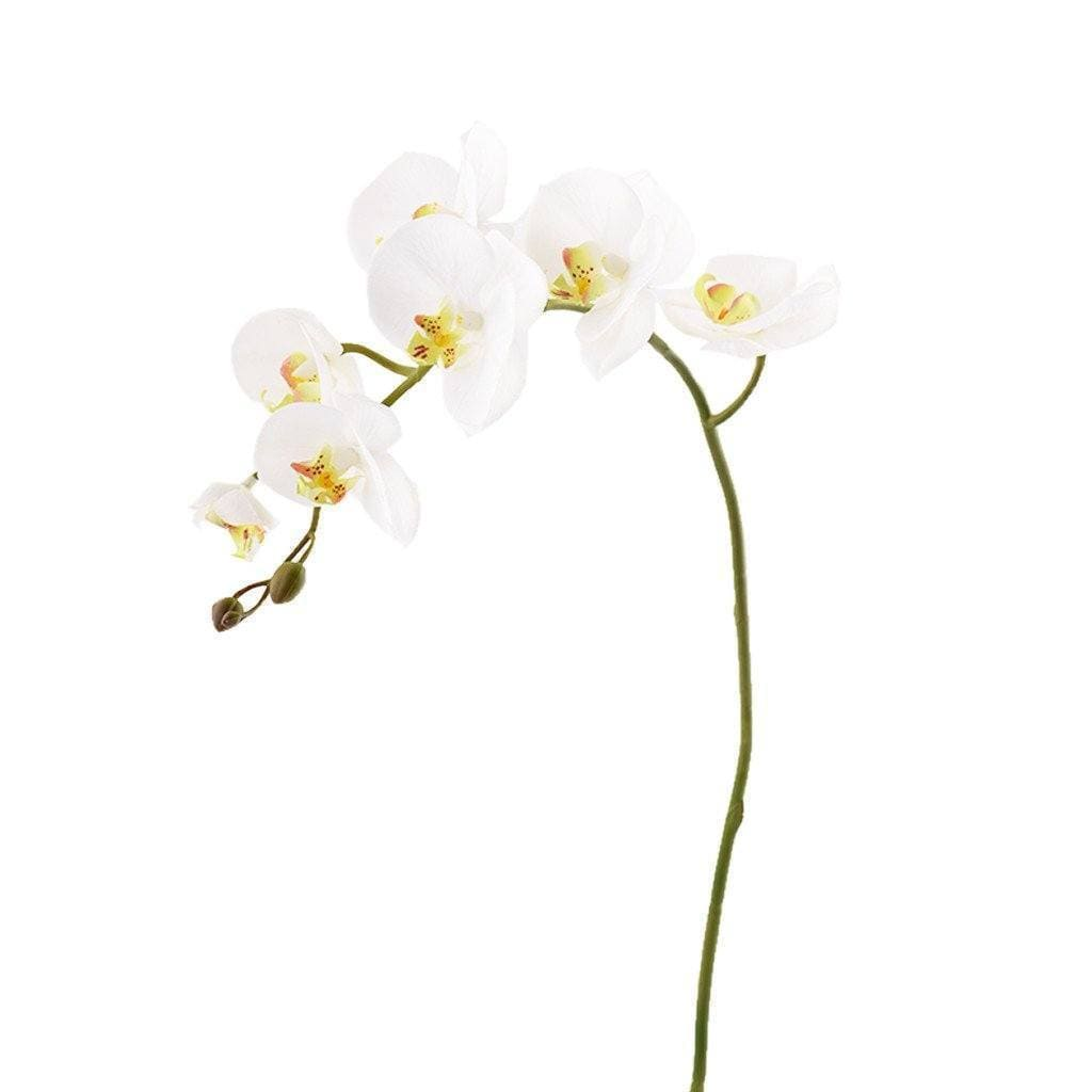 Orchid Stem - Bloomr