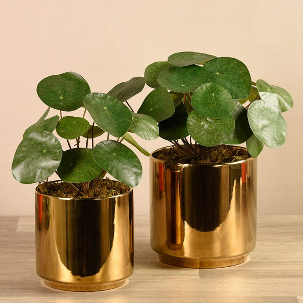 Artificial Pancake Plant in Gold Pot Bloomr Artificial Flowers & Artificial Trees