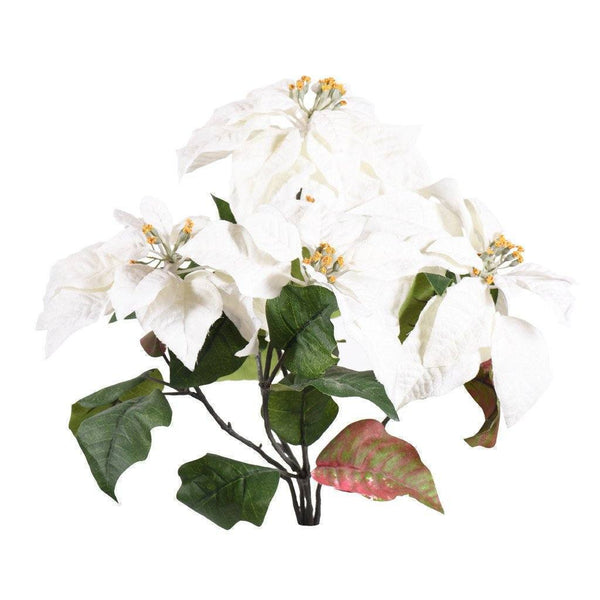a heap of white poinsettia