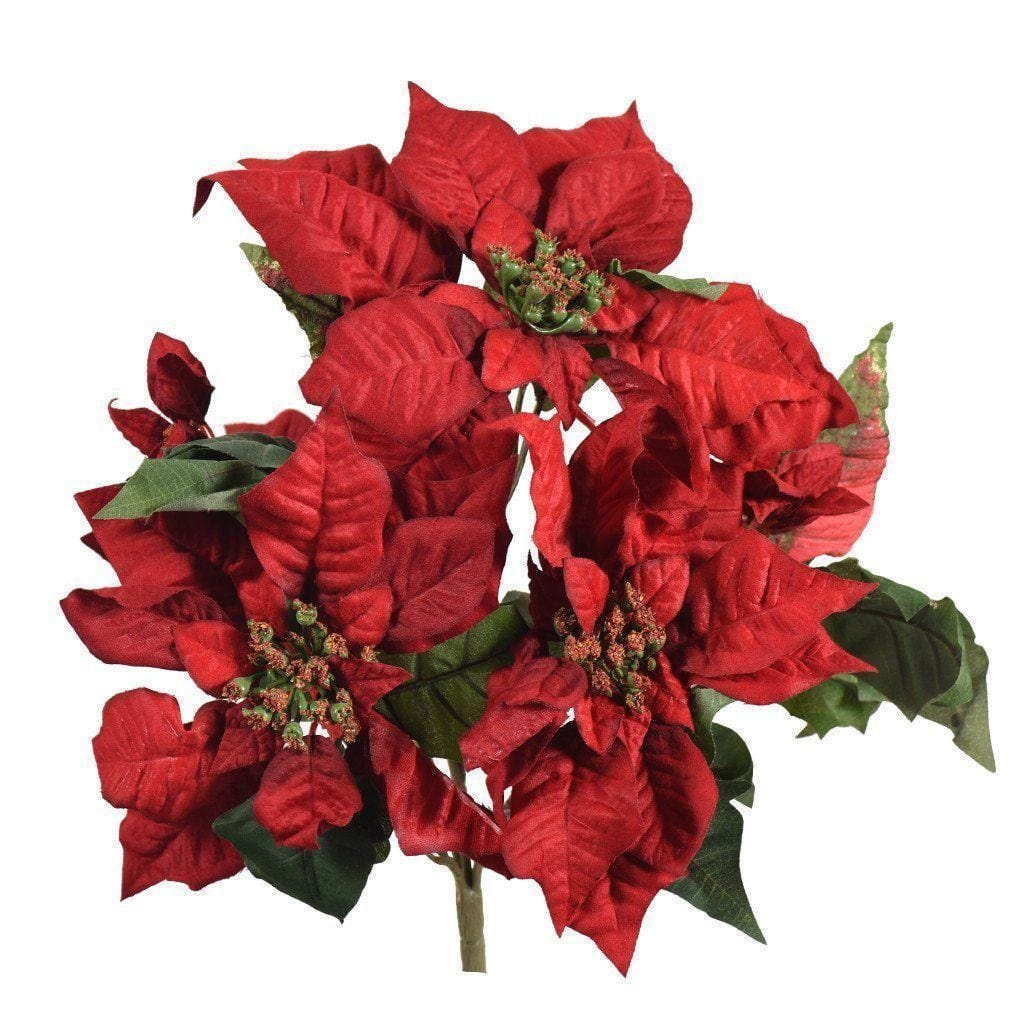 a bunch of red poinsettia