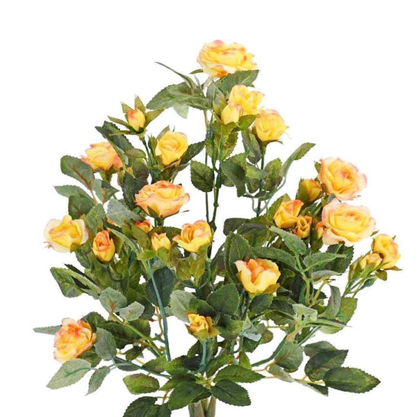 a cluster of yellow rose
