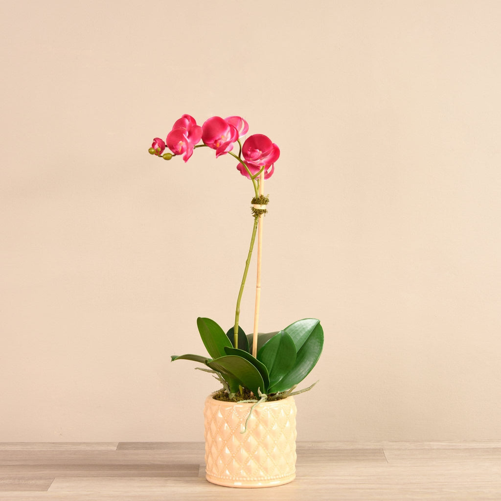 Artificial Orchid Arrangement in Ceramic Vase Bloomr Home Artificial Flowers and Trees