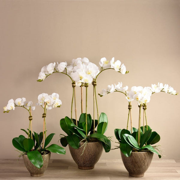 Rustic Orchid Arrangement - Bloomr