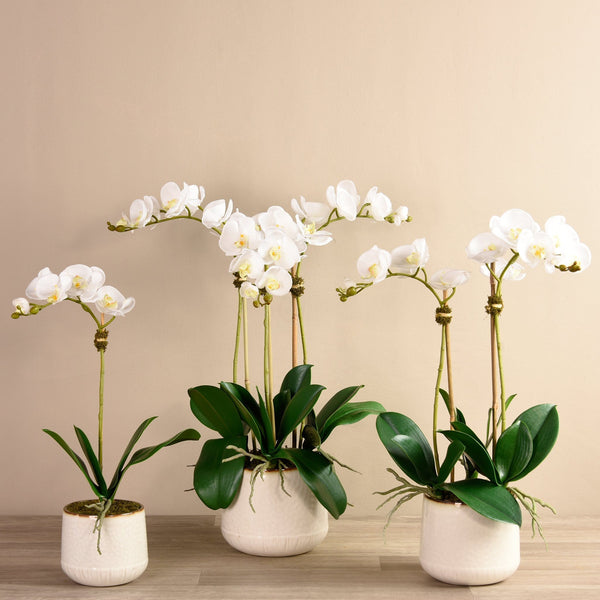 Bistro Orchid Arrangement Bloomr Home Artificial Flowers and Trees
