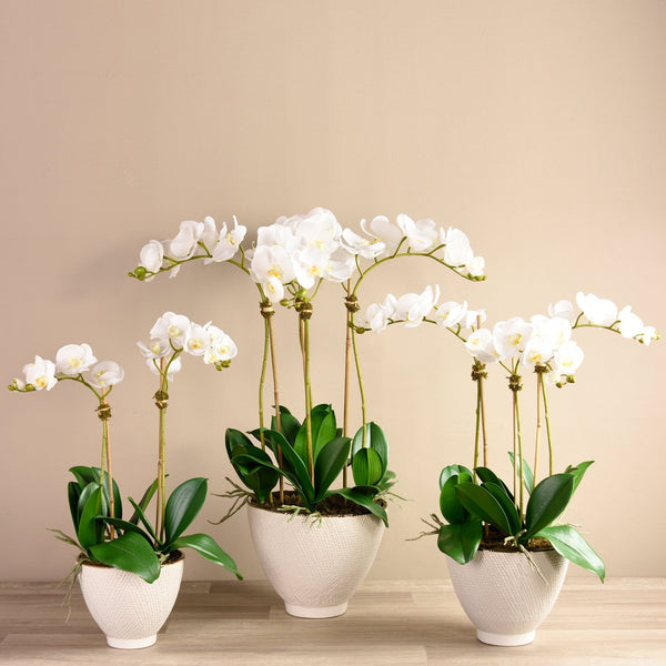 Rustic Orchid Arrangement Bloomr Artificial Flowers & Artificial Trees