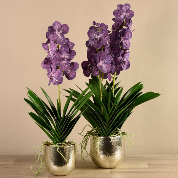Vanda Arrangement - Bloomr