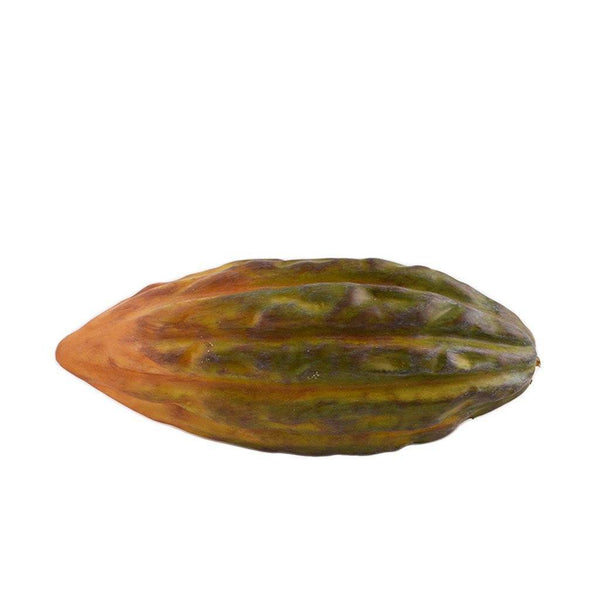 Cacao Fruit - Bloomr