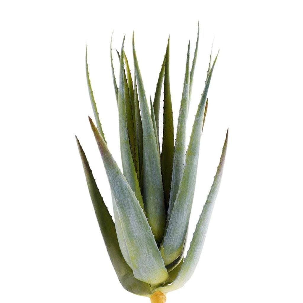 Aloe Leaves Bloomr Artificial Flowers & Artificial Trees
