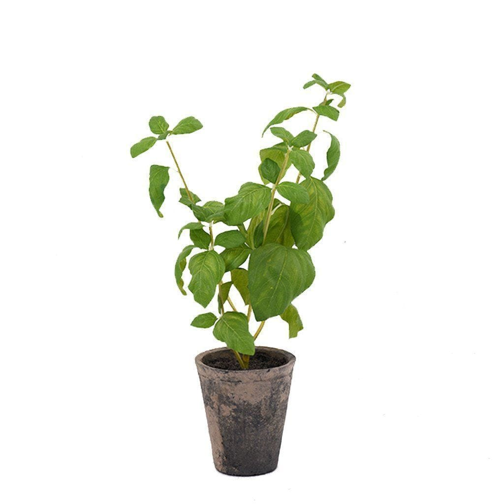 Basil Bloomr Home Artificial Flowers and Trees