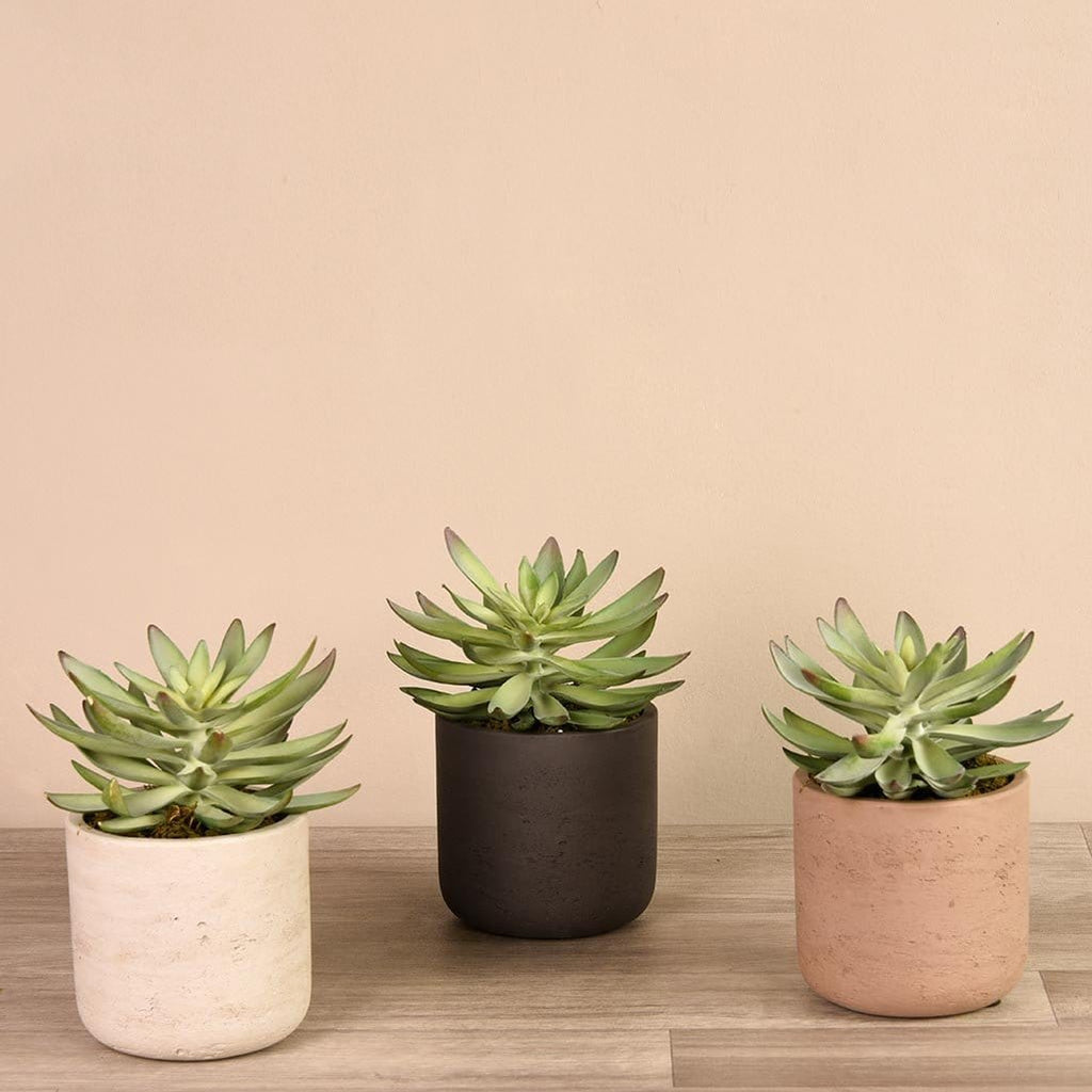 Artificial Desert Echeveria Succulent Bloomr Artificial Flowers & Artificial Trees