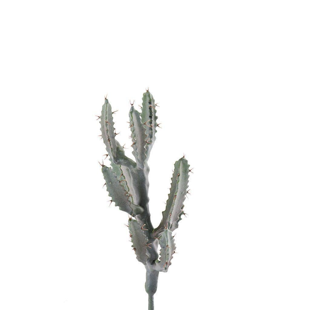Cactus Bloomr Home Artificial Flowers and Trees
