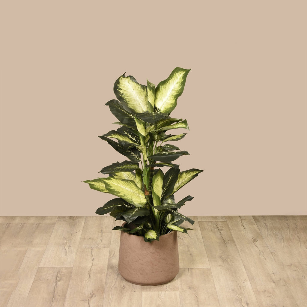 Diffenbachia Plant Bloomr Artificial Flowers & Artificial Trees