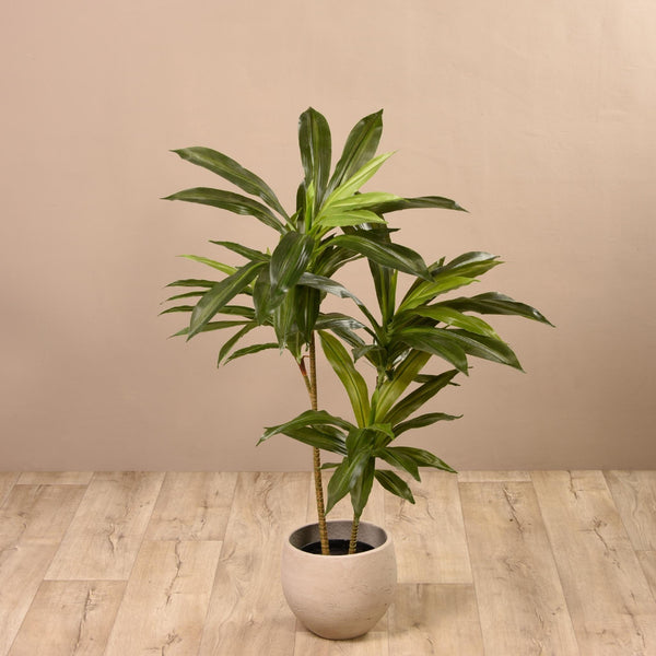 Dracaena Tree Bloomr Artificial Flowers & Artificial Trees