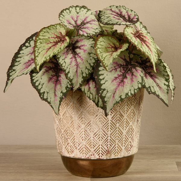 Potted Begonia Bloomr Artificial Flowers & Artificial Trees
