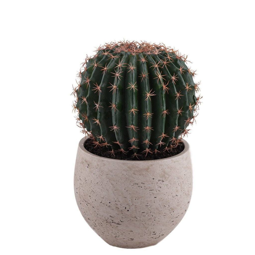 Potted Barrel Cactus Bloomr Artificial Flowers & Artificial Trees