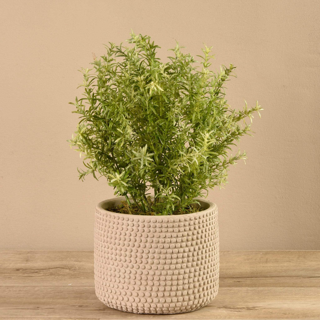 Potted Asparagus Bloomr Artificial Flowers & Artificial Trees