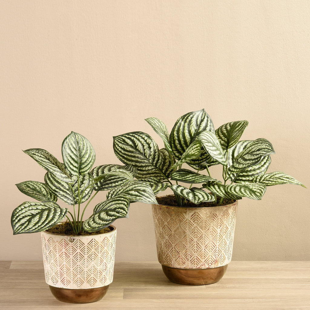 Potted Preperomia Bloomr Artificial Flowers & Artificial Trees