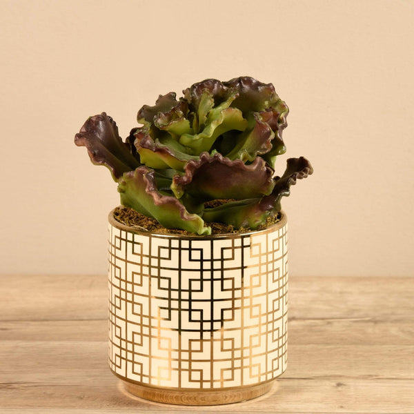 Potted Succulent Bloomr Artificial Flowers & Artificial Trees